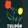 Tulipán cigaretta 1.